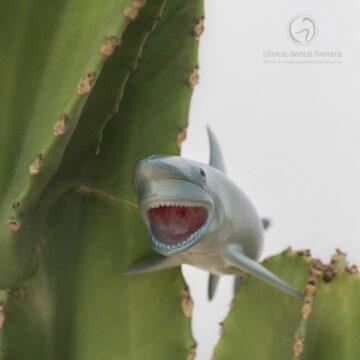 """Los """"dientes de tiburón"""": ¿Qué son y cómo solucionarlos?"""