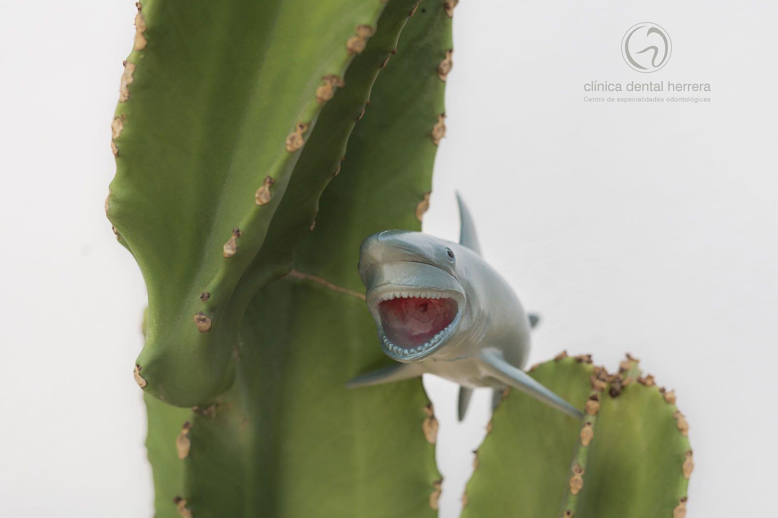dientes-de-tiburon